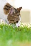 Kat in de tuin Stock Fotografie