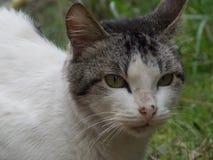 Kat in de tuin Royalty-vrije Stock Foto