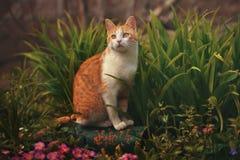 Kat in de tuin Stock Foto's