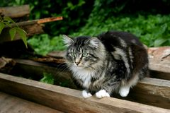 Kat in de tuin Stock Foto
