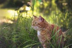Kat in de tuin Royalty-vrije Stock Fotografie