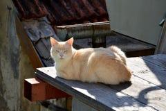 Kat in de tuin Stock Afbeelding