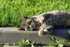Kat in de tuin Tsjechische Republiek stock afbeeldingen