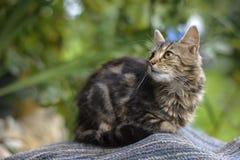 Kat in de werf Stock Foto's