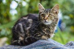 Kat in de werf Royalty-vrije Stock Fotografie