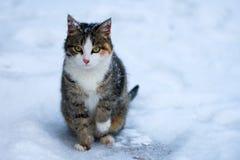 Kat in de winter Royalty-vrije Stock Fotografie