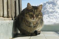 Kat in de winter op de straat royalty-vrije stock afbeeldingen