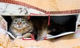 Kat in de zak Royalty-vrije Stock Afbeeldingen