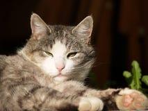 Kat in de zon Stock Afbeelding