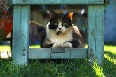 Kat in de zon Royalty-vrije Stock Foto's