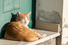 Kat in de zon Royalty-vrije Stock Afbeeldingen