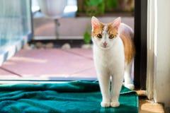 Kat in deuropening Royalty-vrije Stock Foto's