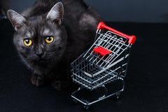 Kat dichtbij lege het winkelen mand stock foto