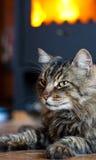 Kat dichtbij Open haard Stock Foto's