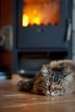 Kat dichtbij Open haard Stock Afbeeldingen