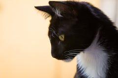 Kat die benedenwaarts kijken Stock Foto