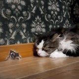 Kat die bij een muis staart Stock Afbeeldingen