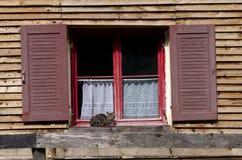Kat die bij een oud raamkozijn zonnebaden Stock Foto's