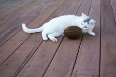 Kat die bruine shell kokosnoot op het oude dek snuiven Royalty-vrije Stock Afbeeldingen