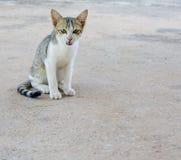 Kat die Camera bekijkt Royalty-vrije Stock Foto's