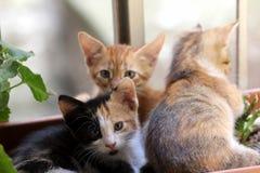 Kat die de camera bekijken Stock Foto