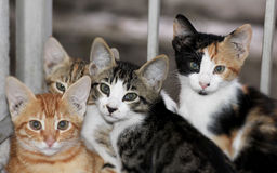 Kat die de camera bekijken Stock Afbeeldingen