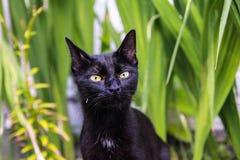 Kat die de camera onderzoeken Stock Foto