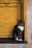 Kat die in de deuropening wachten Stock Afbeelding