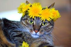Kat die de kroon van de paardebloemenbloem dragen Stock Fotografie