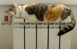 Kat die in de radiator zonnebaadt Stock Afbeelding