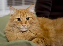 Kat die denkt is zij koningin Royalty-vrije Stock Foto's