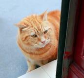 Kat die in deur kijken Royalty-vrije Stock Foto's
