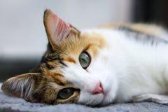 Kat die direct de camera bekijken Stock Foto