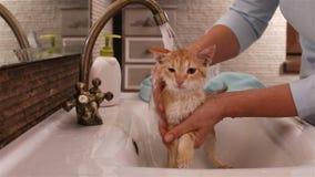Kat die door eigenaar in de badkamersgootsteen wordt gewassen stock videobeelden