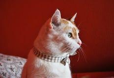 Kat die een boog dragen stock afbeeldingen