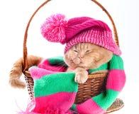 Kat die een roze breiende hoed met pompom en een sjaal dragen Royalty-vrije Stock Fotografie