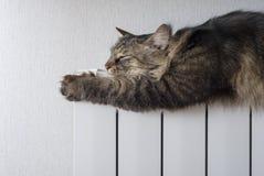 Kat die een warme radiator liggen Stock Foto's
