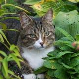 Kat die in het gras liggen Observant, charmante kat die in het gras in de tuin liggen royalty-vrije stock afbeeldingen