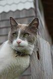 Kat die Hoofd wrijft tegen Post Royalty-vrije Stock Foto's
