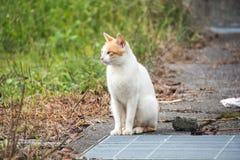 Kat die iets bekijkt Stock Afbeelding