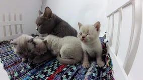 Kat die katjes in een kleine werf, gekleurd gestript tapijt behandelen stock videobeelden
