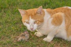Kat die muis eet Royalty-vrije Stock Foto's