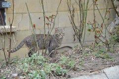 Kat die neer in de tuin lopen royalty-vrije stock afbeeldingen
