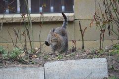 Kat die neer in de tuin lopen stock afbeeldingen