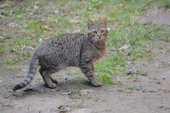 Kat die onderaan de tuin lopen stock fotografie