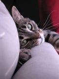 Kat die oogcontact opneemt Stock Foto's
