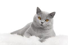 Kat die op bont ligt Royalty-vrije Stock Fotografie