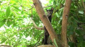Kat die op de boom beklimmen stock videobeelden