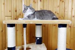 Kat die op de bovenkant van een reusachtig kat-huis rust Royalty-vrije Stock Foto's