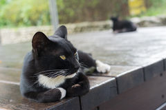 Kat die op de stoel liggen royalty-vrije stock fotografie
